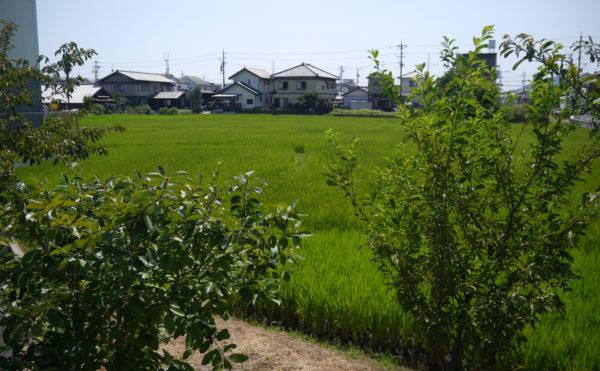 施設の裏には田んぼがあります。