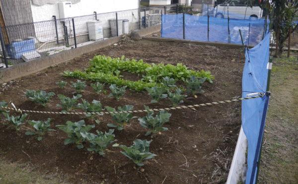 外の庭園で育てた野菜が食卓に。