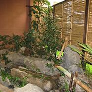 施設内からでも緑を感じられる坪庭
