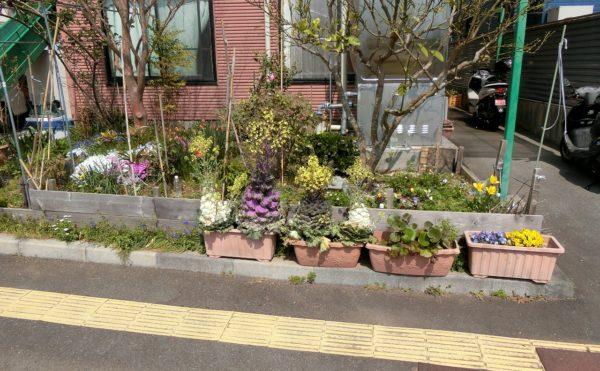玄関前② 大きな花壇スペースが設けれれていて、沢山の植物や色とりどりの花が咲いてます。(光の家ゆりかご)