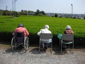 季節によっては、施設の目の前の茶畑で茶摘みレク!