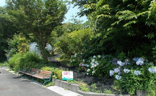 お散歩道とベンチ 緑が沢山ある遊歩道があり、ゆっくりと散歩したり、腰掛けたりとくつろげます。(シンシア清水)