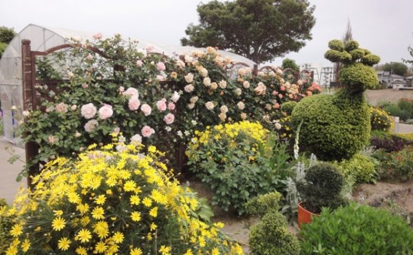 イングリッシュ・ガーデン③ ガーデン内には様々な植物があり、バラコーナーも見ごたえがあります。(グループホーム今日香)