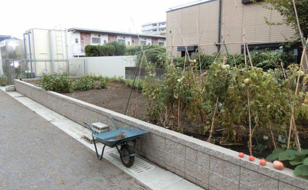 野菜園 施設の外には花壇や畑が設けられており、植物や野菜作りを楽しむ事が出来ます。(ロータスケア緑ヶ丘)
