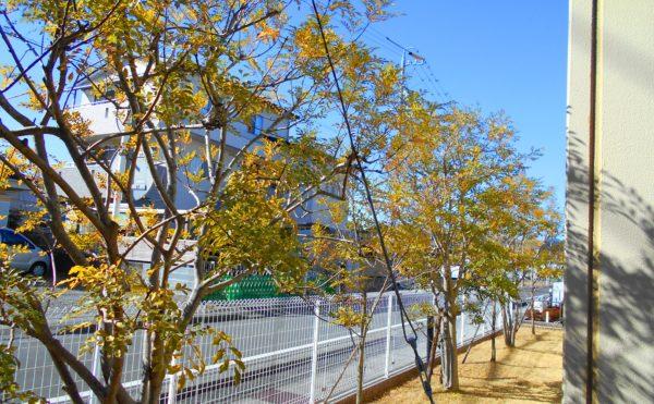 道路側の木々 道路側の景観配慮として植物が生育されています。(プレミアムハートライフ千代田)