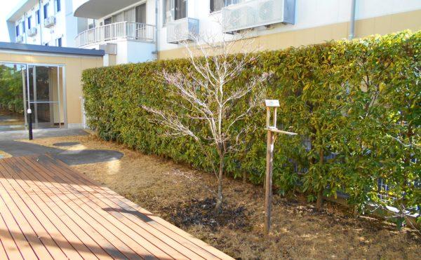 ウッドテラスと庭 庭の植物や木々と一緒にウッドテラスでくつろぐことが出来ます。(プレミアムハートライフ千代田)