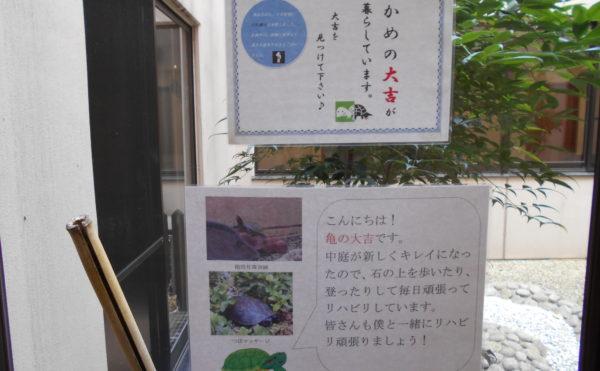 亀の大吉くん 新しくリニューアルされた中庭スペースに癒しの亀の大吉くんが生息しています。(有料老人ホーム ペリデ長田)