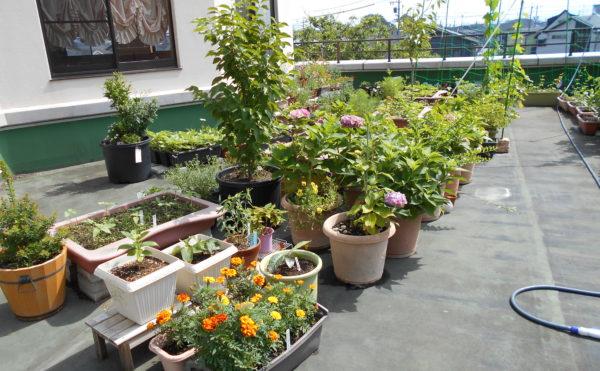 ベランダ 大きなベランダには沢山の植物が育てられていて楽しめる空間となっています。(有料老人ホーム ペリデ長田)
