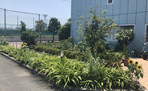 入り口には沢山の草花 入口エントランス付近には訪れる人を植物や草花で和ませてくれます(アレンジメントケア桜ヶ丘)
