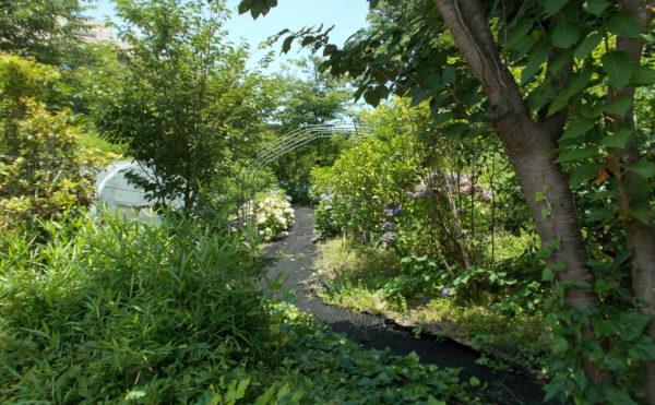 お花とお散歩 自然豊かな遊歩道が設けられていてゆっくりと森林浴を楽しみながら散歩することが出来ます。(シンシア清水)