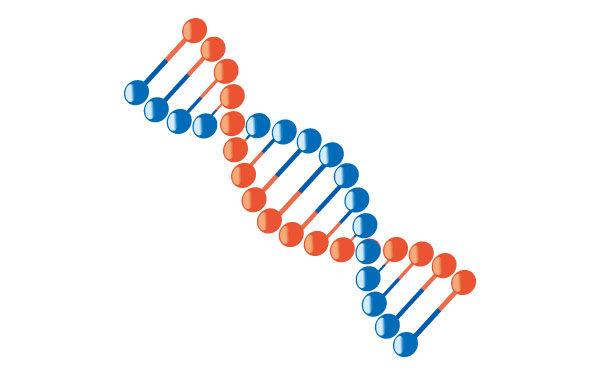 今話題の遺伝子検査をやってみた! その2 遺伝子検査の結果