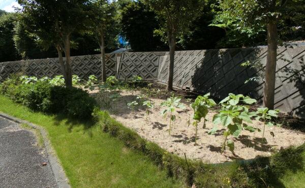 家庭菜園スペースもあります。敷地が広く、散歩コースにもピッタリです。